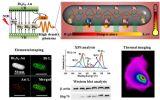 纳米材料生物响应研究取得进展