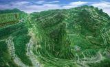 广东今年将建成60个绿色矿山