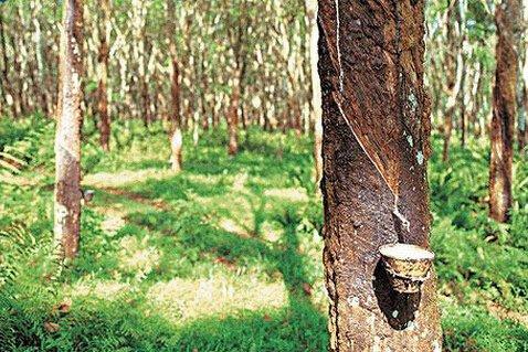 泰国橡胶:减少种植总面积 并增加国内消耗量