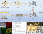 大连化物所石墨烯气凝胶应用于高体积比能量锂硫电池研究获进展