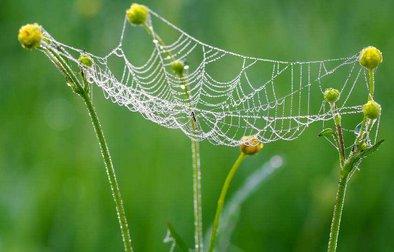 """我国学者模仿蜘蛛网研制出""""超弹性""""硬碳材料 """