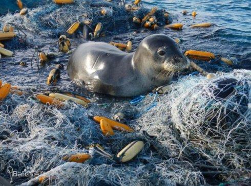 """G20就海洋塑料垃圾""""2050年降为零""""达成共识 日媒:实现有难度"""