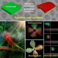 我国科研人员研制出兼具变色和变形性能新型材料