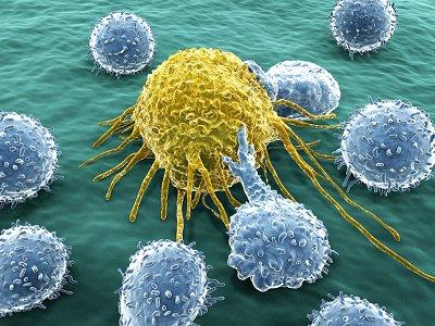 新型肝芯片可跨物种识别药物毒性