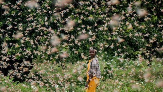 印度蝗虫又火了中国农药,农药剂型研制如何突围创新困境?