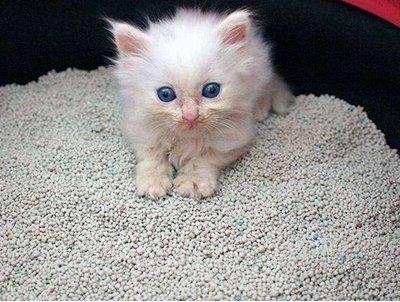 猫砂已成为我国非金属矿产业不可忽视的新增长点 发展猫砂产业需要注意以下几点!