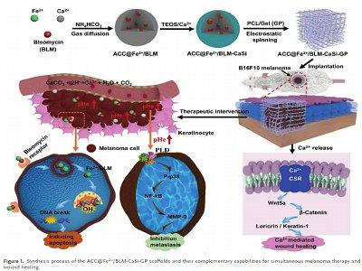 重庆大学罗忠教授、中科大俞书宏院士合作《AFM》:基于碳酸钙材料的生物可吸收支架用于术后组织修复