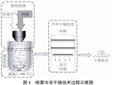 喷雾冷冻干燥技术及其在三大领域的应用现状
