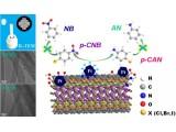 铂-碳相互作用调节在硝基类还原反应中的构效关系研究获进展