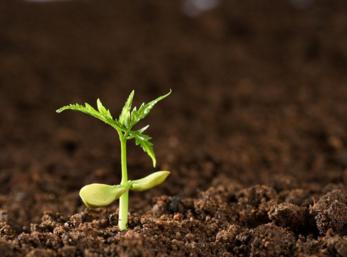 """我国学者研制出高效去除""""土壤毒素""""的新材料"""