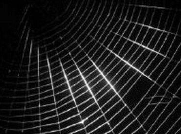 再出奇招!给蜘蛛喂食石墨烯后 其吐出的蜘蛛丝韧性提升10倍