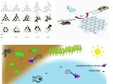 科技前沿 | 理学院马永强教授课题组成功将类石墨烯纳米材料氮化碳应用于农药残留消除