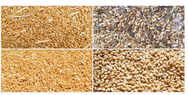 安徽捷泰智能科技有限公司 小麦专用色选机 合肥捷泰智能  8, 电路板