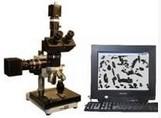数码摄影金相显微镜图片